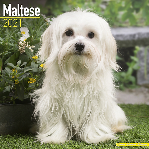2021 Maltese Calendar
