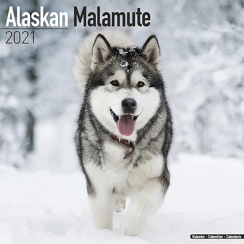 2021 Alaskan Malamute Calendar