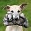 Thumbnail: Fluff & Tuff Americas Blanca Wolf