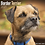 Thumbnail: 2021 Border Terrier Calendar