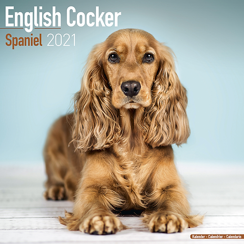 2021 English Cocker Spaniel Calendar