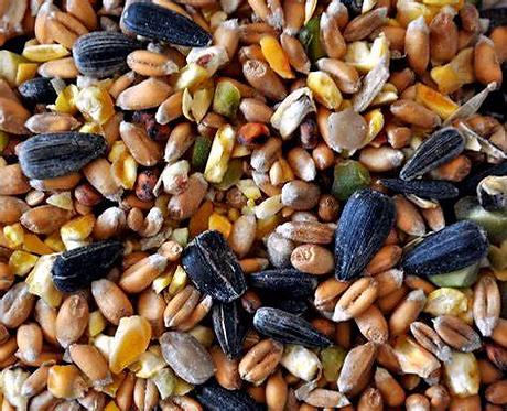 Wild Bird Seed Mix 1kg, 20kg Price from