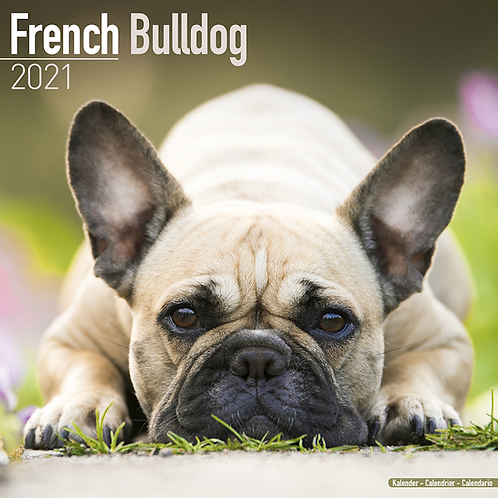 2021 French Bulldog Calendar