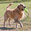 Thumbnail: Airdog® Fetch Stick with Rope. Price from