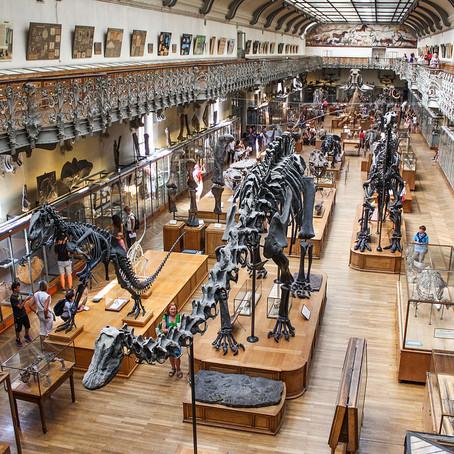 CHAPITRE 38 : LE MUSEUM D'HISTOIRE NATURELLE