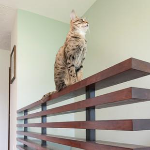 Custom Built Stair Rails
