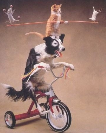 Dog on trike with balancing cat.