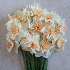 YVANNE Fleurs Paysannes