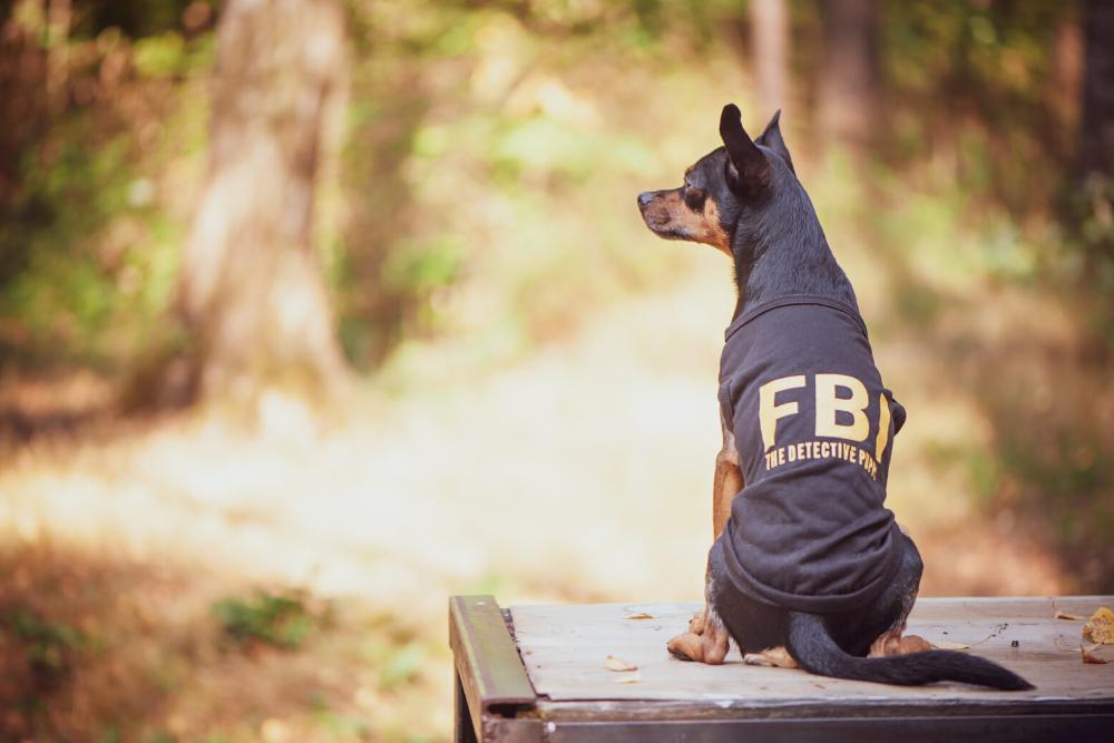 Krimitour mit Hund