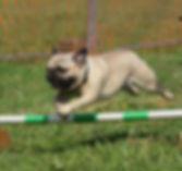 Beschäftigung Hund, Hundeschule, Hundetraining, Hundeerziehung, Hundetrainer