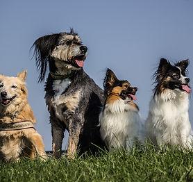 Hundspaziergang, Hundetraining,Hundeschule, Nasenarbeit, Beschäftigung Hund,