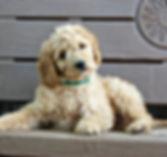puppy-2049767_1280.jpg
