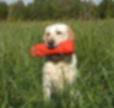 Appotieren, Hundetrainng, Dummysuche, Nasenarbeit, Schnüffeln, Beschäftigng für Hunde