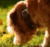 Nasenarbeit Gehirnjogging Schnüffeln Dummy Suche Apportieren geistige Beschäftigung Gruppentraining Personensuche, Hundetraining