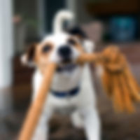 Junghunde, Junghundekurs, Hundeerziehung, Hunde erziehen,