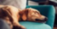 Blog Schlafen ist gesund-1.png