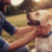 Hundespaziergang, Spaziergang mit Hund,