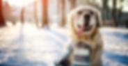 Blog Hund im Winter.png