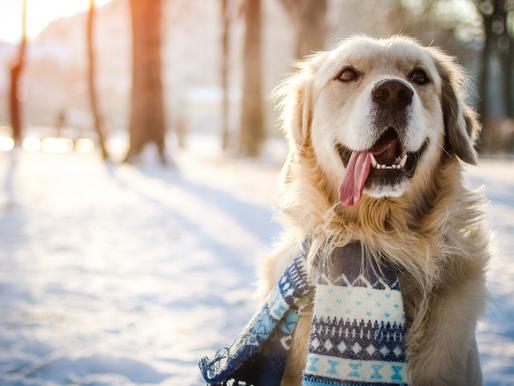 Tipps für die kalte Jahreszeit
