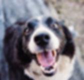 Wecher Hund passt, Kind und Hund, Tierschutzhunde, Angst vor Hunden,