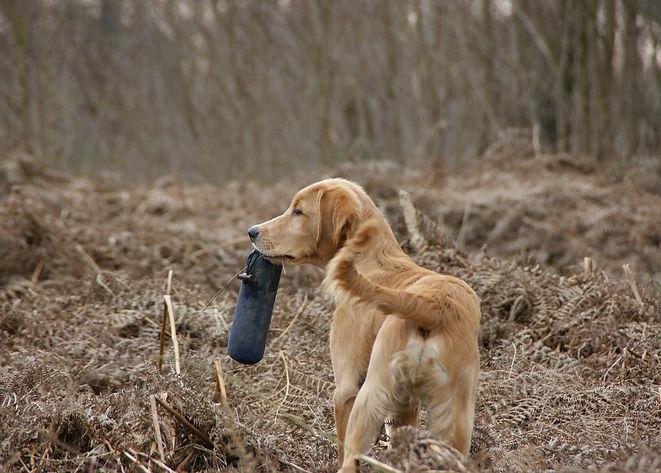 Mantrailing, Apportieren, Dummytraining, Dummyarbeit, Anti-Jagd-TrainTraining, Beschäftigung, Hundetraining, Hundeschule