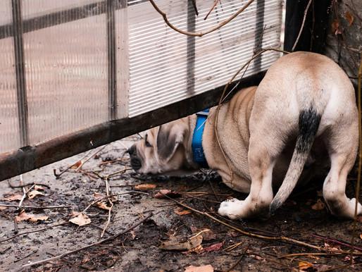 Hund vermisst – was tun?