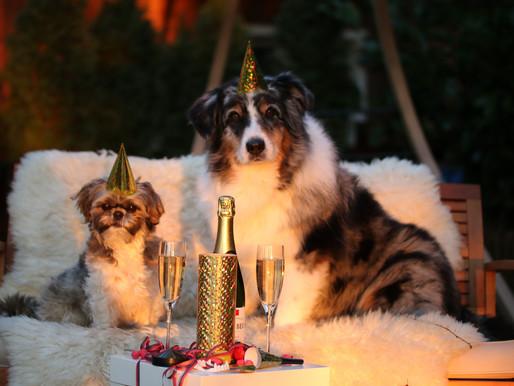 Tipps für Silvester mit Hund