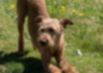 dog-733832_640.jpg