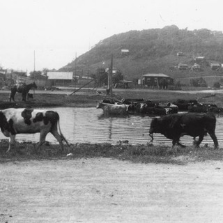 watering hole in 1930