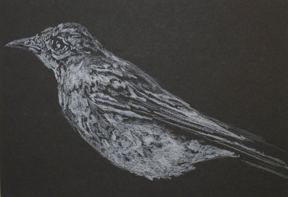 """Whitebird Chain White Colored Pencil on Black Paper 8"""" x 10"""""""