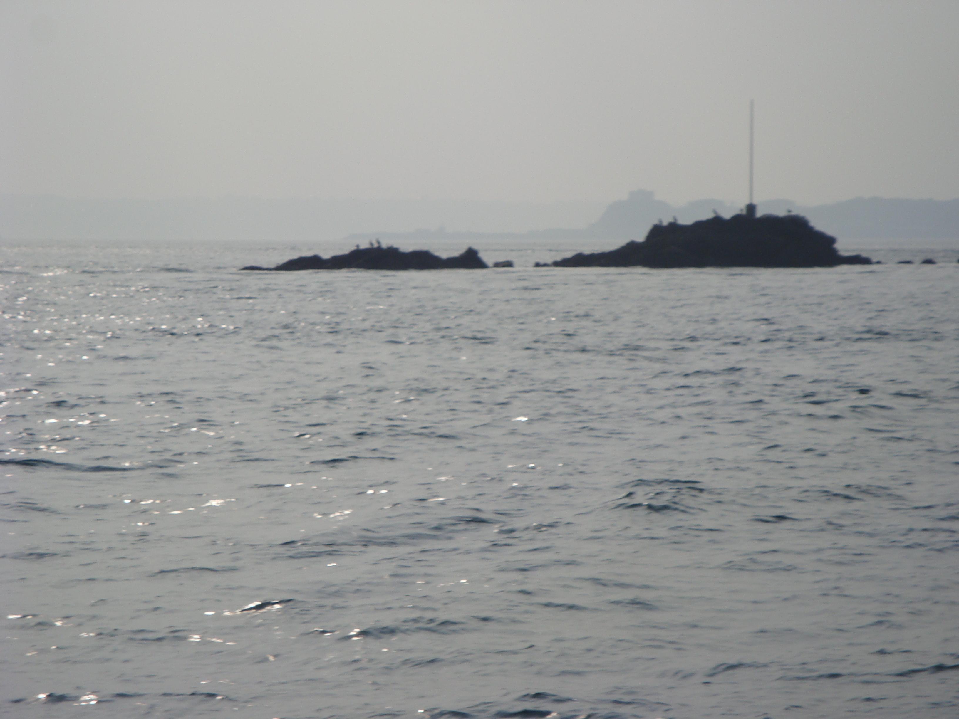 Coastal Skipper