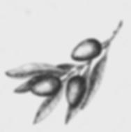 LRG_Olive%2520leaf_edited_edited.png