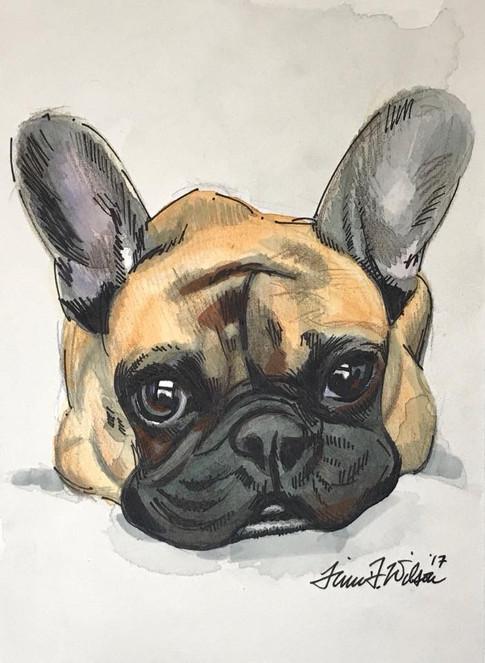 Dog Portrait - Frenchie