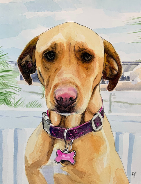 Dog Portrait - Kailani