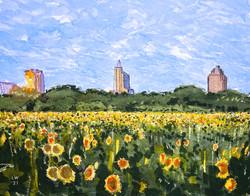 Raleigh Sunflower Gardens