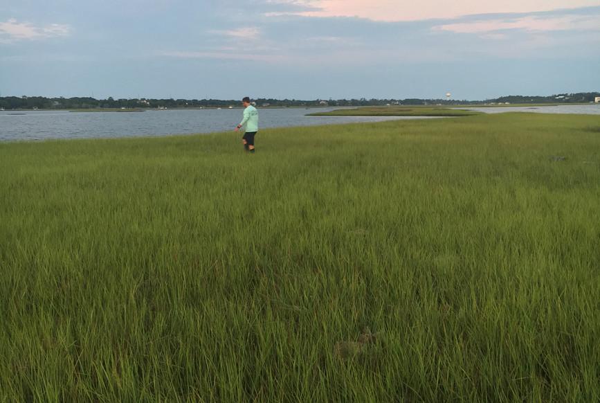 Early morning marsh
