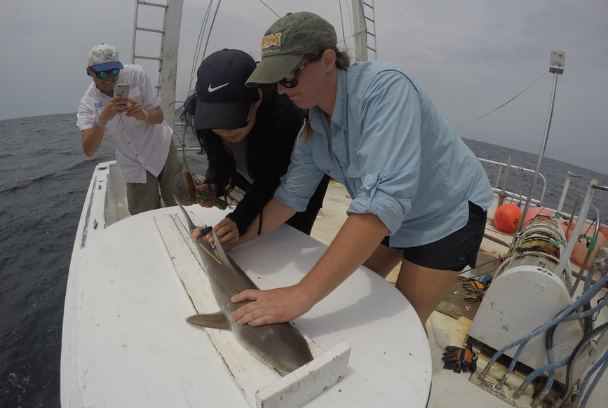 UNC Shark Survey