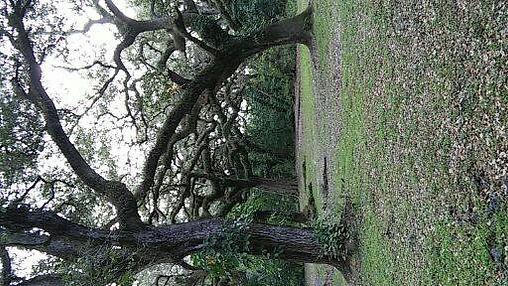 Treetops Park