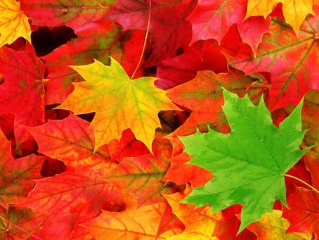 Même en automne, faites grimper la température!
