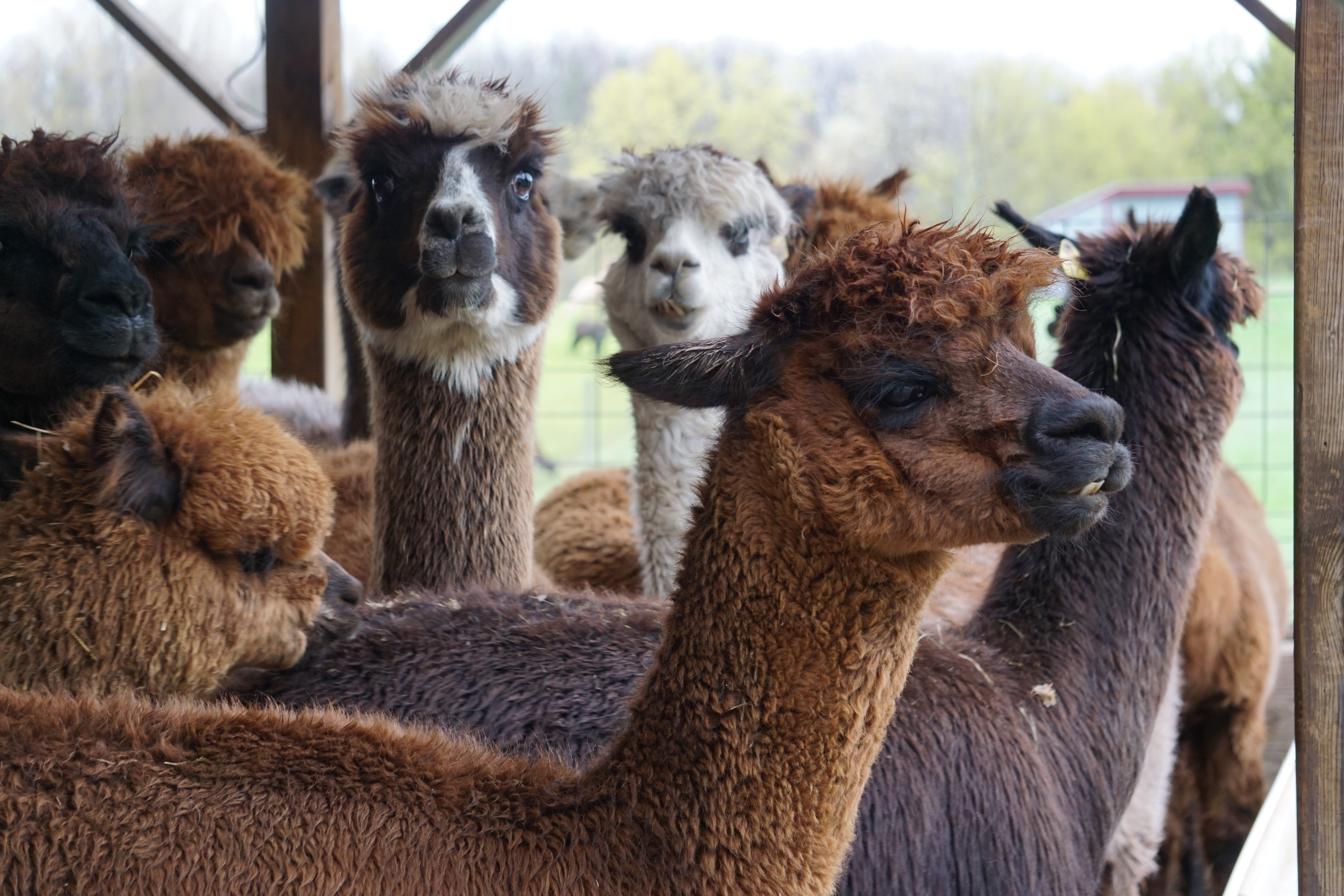 Farm Tour: 4 or less in your group
