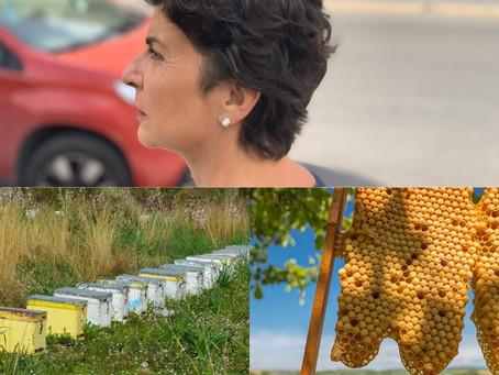 Απαιτείται δέσμη άμεσων παρεμβάσεων για την προστασία της μελισσοκομίας.
