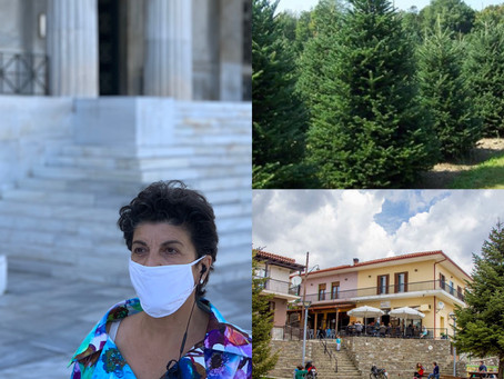 Nα ξεκινήσει η υλοτόμηση και πώληση των χριστουγεννιάτικων έλατων του Ταξιάρχη Χαλκιδικής
