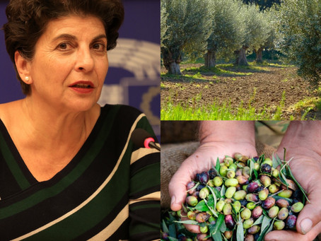Να ενταχθεί η πράσινη ελιά στα μέτρα ενίσχυσης των προϊόντων που πλήττονται από την πανδημία.