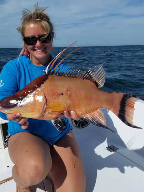 Land a Hogfish