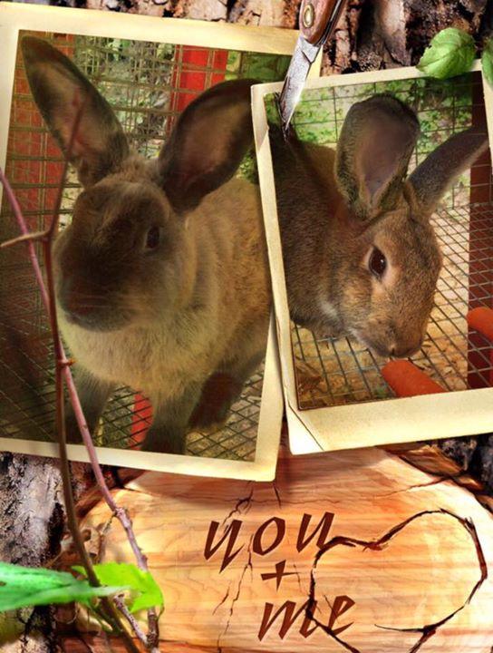 Talking Trees Preserve Rabbitry Murphy Nc