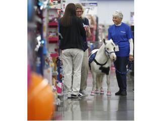 Johnsburg WalMart welcomes miniature horse Serebella!