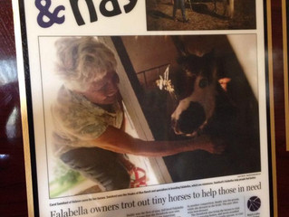 Yay & Nay: Falabella owners trot out tiny horses to help those in need