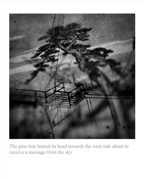 5.  THE PINE TREE LEANED ITS HEAD TOWARDS THE WEST SIDE ABOUT TO RECEIVE A MESSAGE FROM THE SKY (2010) by LEE Ka Sing 李家昇