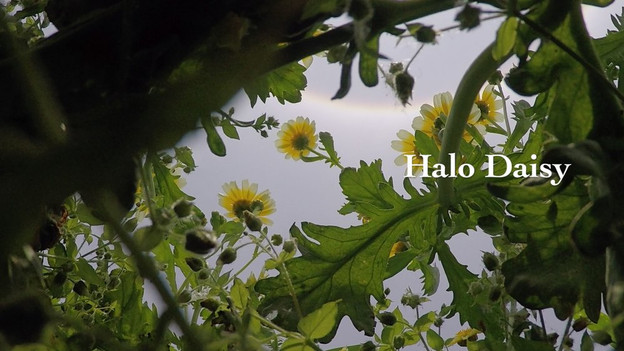 LO Lai Lai Natalie 勞麗麗  Weather girl I Halo Daisy 天氣女郎  2016  Video, 6 min 32 sec, Edition 2/5