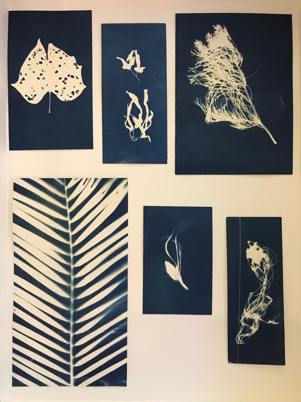 LAW YUK MUI 'On Junk Bay, The Plant' (1990-present), duration: 2 mins 56 secs. Cyanotype of plants from Junk Bay